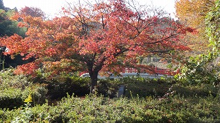 城山公園紅葉情報_c0208355_1563771.jpg