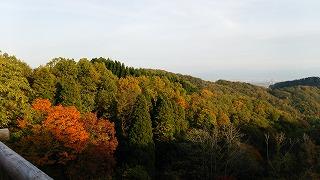 倶利伽羅県定公園周辺紅葉情報_c0208355_16122021.jpg