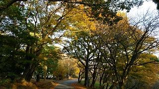 倶利伽羅県定公園周辺紅葉情報_c0208355_16125455.jpg