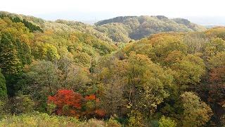 倶利伽羅県定公園周辺紅葉情報_c0208355_16224369.jpg