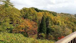 倶利伽羅県定公園周辺紅葉情報_c0208355_1623156.jpg