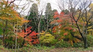倶利伽羅県定公園周辺紅葉情報_c0208355_16271676.jpg