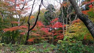倶利伽羅県定公園周辺紅葉情報_c0208355_16273217.jpg