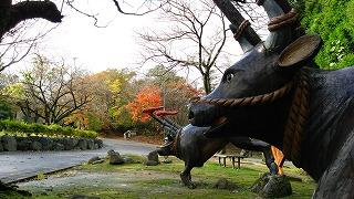 倶利伽羅県定公園周辺紅葉情報_c0208355_1627714.jpg
