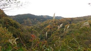 倶利伽羅県定公園周辺紅葉情報_c0208355_16292471.jpg