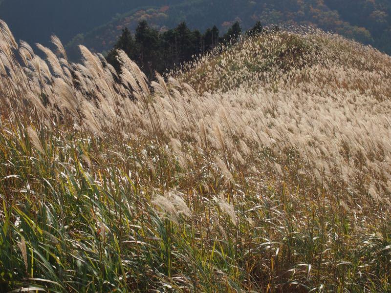 奈良の曽爾高原へハイキング_b0277377_10562993.jpg