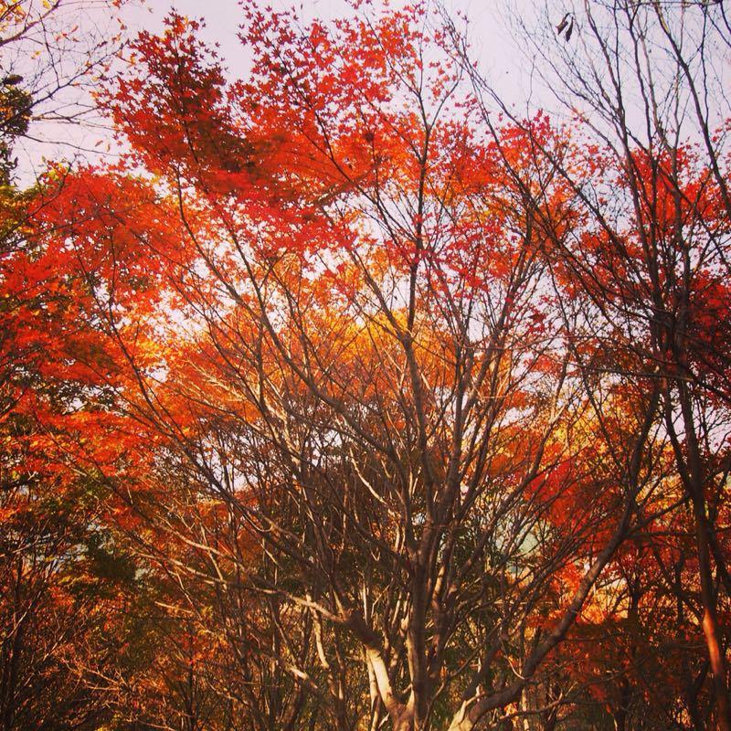 奈良の曽爾高原へハイキング_b0277377_10563523.jpg