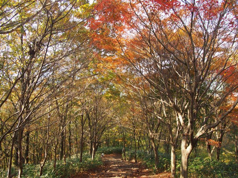 奈良の曽爾高原へハイキング_b0277377_10563816.jpg