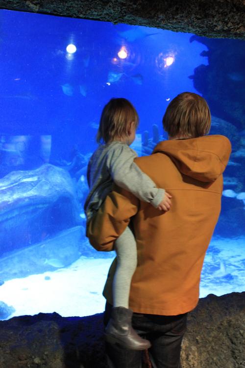 ろんどん水族館へ_a0137487_536753.jpg