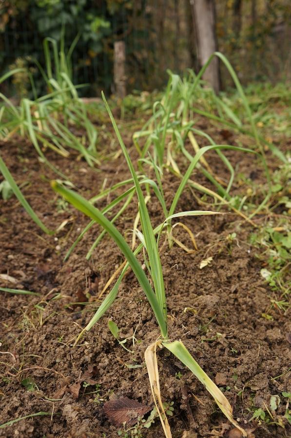 畑の草むしり_f0106597_23105957.jpg