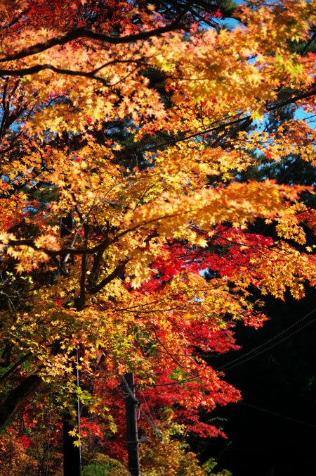 日光山内 二社一寺の紅葉1_a0263109_1347133.jpg