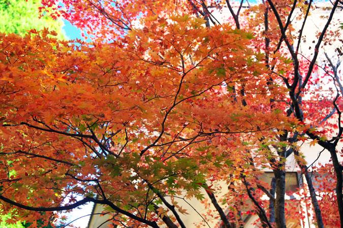 日光山内 二社一寺の紅葉1_a0263109_13471997.jpg