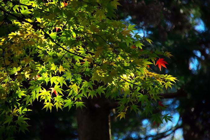 日光山内 二社一寺の紅葉1_a0263109_13472182.jpg