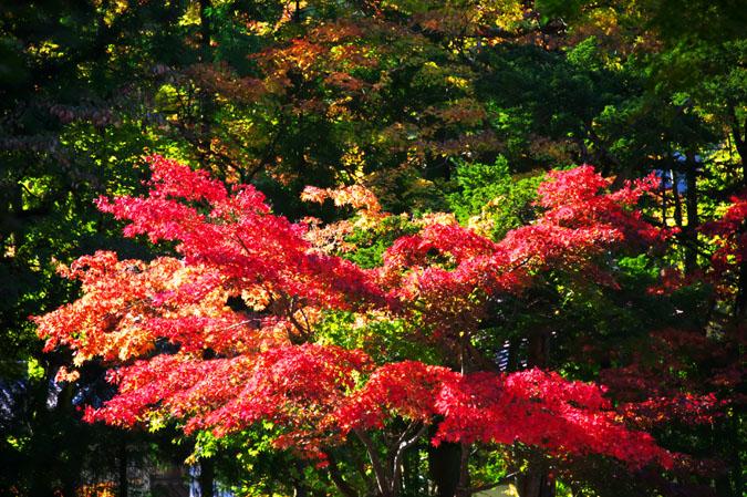 日光山内 二社一寺の紅葉1_a0263109_13472424.jpg