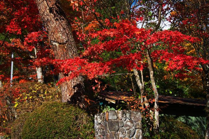日光山内 二社一寺の紅葉1_a0263109_1347763.jpg
