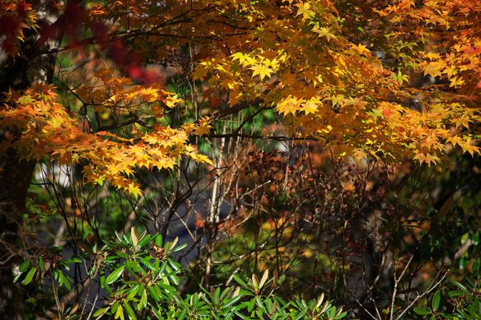 日光山内 二社一寺の紅葉1_a0263109_1347863.jpg