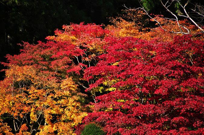 日光山内 二社一寺の紅葉1_a0263109_13482145.jpg