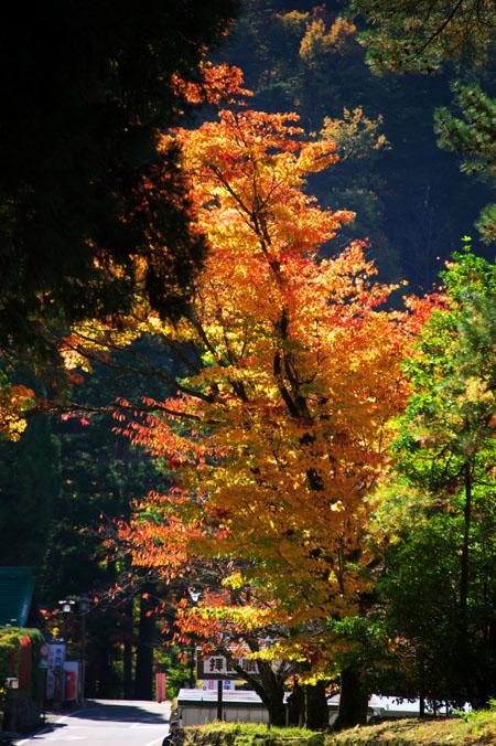 日光山内 二社一寺の紅葉1_a0263109_1349152.jpg