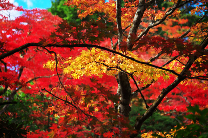 日光山内 逍遥園の紅葉1_a0263109_17554999.jpg