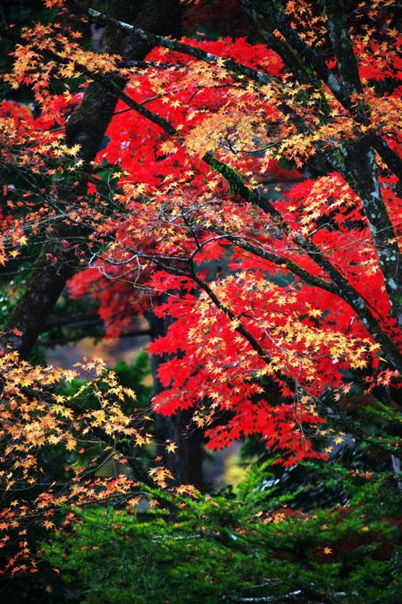 日光山内 逍遥園の紅葉1_a0263109_17561154.jpg