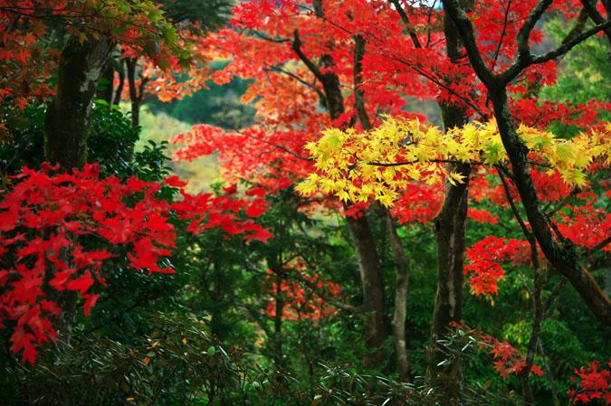 日光山内 逍遥園の紅葉1_a0263109_1756262.jpg