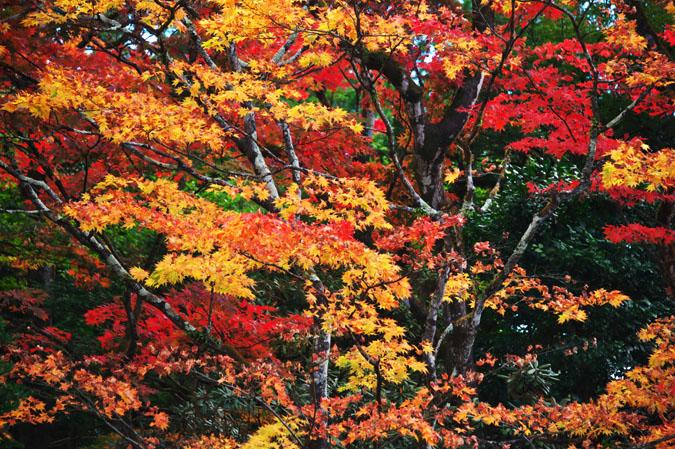 日光山内 逍遥園の紅葉1_a0263109_1756432.jpg