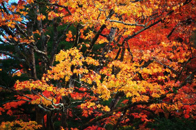 日光山内 逍遥園の紅葉1_a0263109_175679.jpg