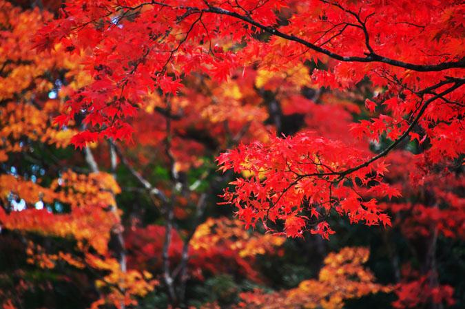 日光山内 逍遥園の紅葉1_a0263109_1756853.jpg