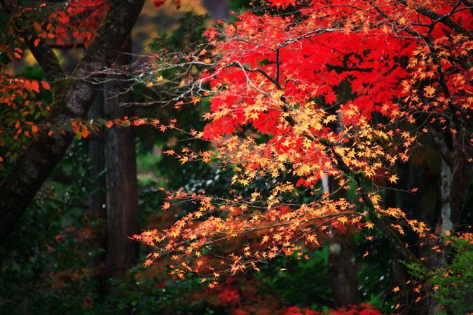 日光山内 逍遥園の紅葉1_a0263109_1757049.jpg