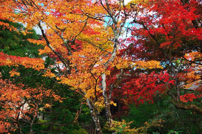 日光山内 逍遥園の紅葉1_a0263109_17581773.jpg