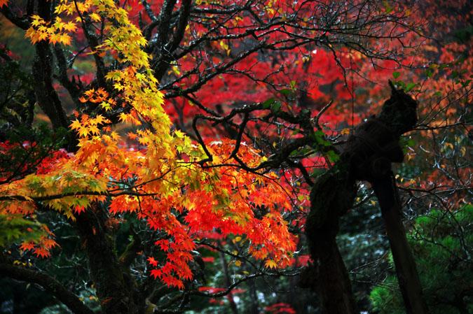日光山内 逍遥園の紅葉1_a0263109_17584694.jpg