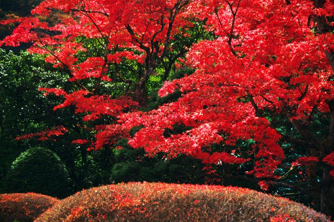 日光山内 逍遥園の紅葉1_a0263109_1758724.jpg