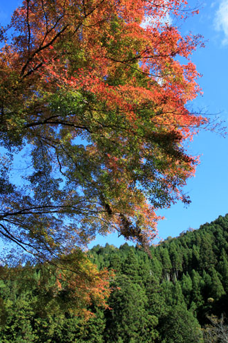 14紅葉めぐり8 京見峠から杉坂地蔵院へ_e0048413_19515170.jpg