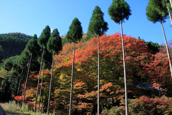 14紅葉めぐり8 京見峠から杉坂地蔵院へ_e0048413_1951889.jpg
