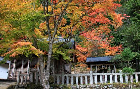 14紅葉めぐり 9 上弓削熊野神社_e0048413_2027467.jpg