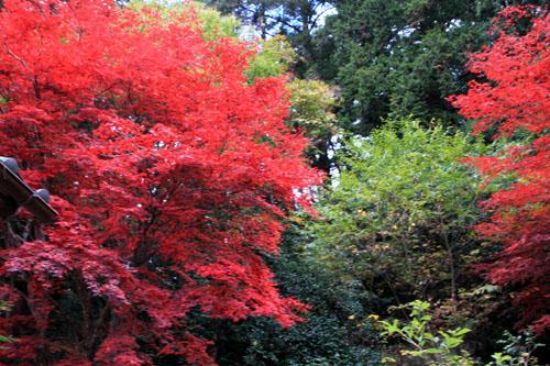 14紅葉めぐり 9 上弓削熊野神社_e0048413_202844100.jpg