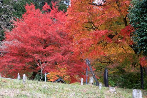 14紅葉めぐり 9 上弓削熊野神社_e0048413_20292954.jpg