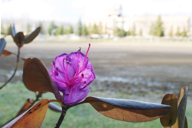 2014年11月15日(土):春はまだ遠いけれど[中標津町郷土館]_e0062415_1733129.jpg