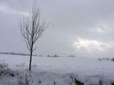 一気に冬景色_f0096216_9334314.jpg