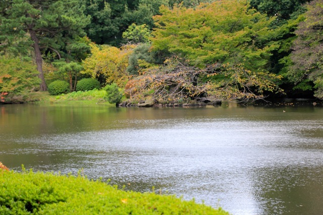 【新宿御苑】カメラ散歩 part 5_f0348831_19413813.jpg