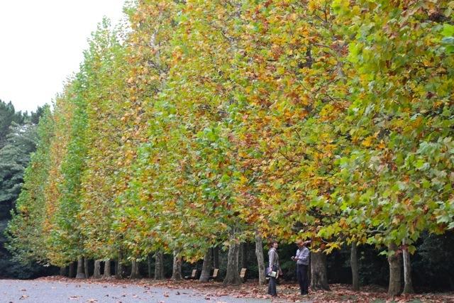 【新宿御苑】カメラ散歩 part 5_f0348831_19414850.jpg