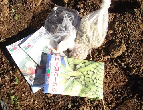 地味な作業、豆の種まき!_b0137932_1344871.jpg