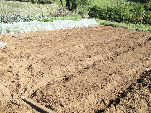 地味な作業、豆の種まき!_b0137932_13453580.jpg