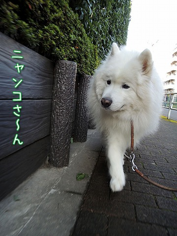 お散歩の季節_c0062832_7494995.jpg