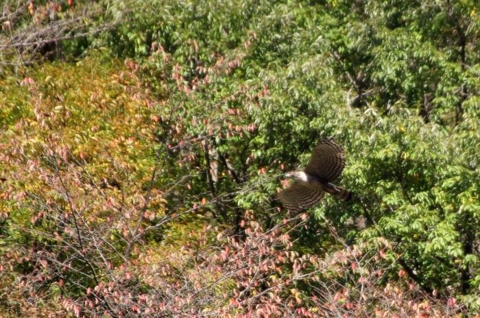 2014.11.15 震える手で・丹沢湖・クマタカ_c0269342_17352123.jpg