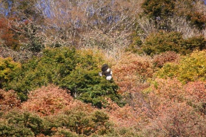 2014.11.15 震える手で・丹沢湖・クマタカ_c0269342_18315737.jpg