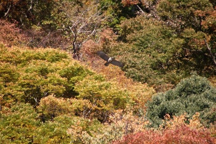 2014.11.15 震える手で・丹沢湖・クマタカ_c0269342_18325049.jpg