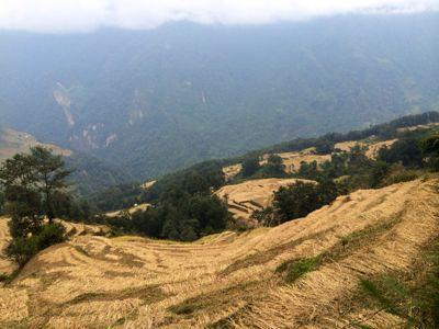 南部、ネパールの山林の中を歩くの巻_d0197762_11215992.jpg