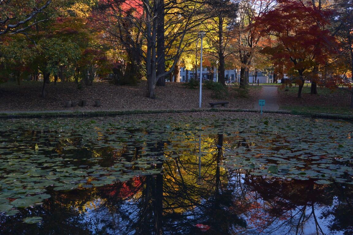 """2014年10月 北大キャンパス紅葉 2014 October \""""Autumn color in Hokkaido University\""""_c0219616_14355659.jpg"""