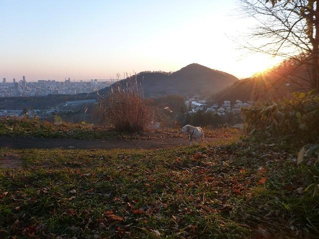 荒井山から_c0048117_13353087.jpg